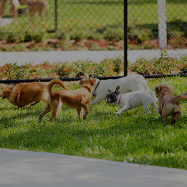 Large Dog Park at Pinegate  Apartments